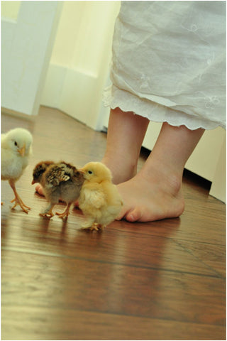 Chicks on wooden floor near feet of girl in linen dress