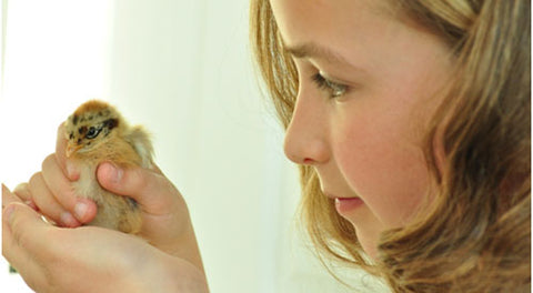 Daughter holding newborn chick in hands near face