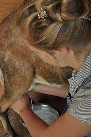 Mary-Beth-Milking-goat-milk-going-into-Small-Pail