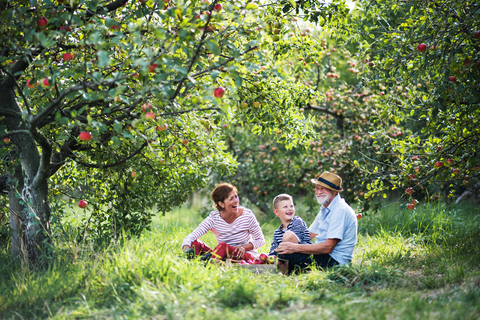 two grandparents and child sitting in apple orchard