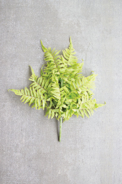 Fern Bundle