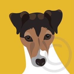 Jack Russell 5