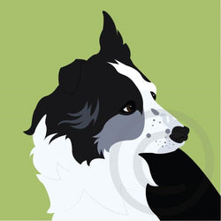 Border Collie 2