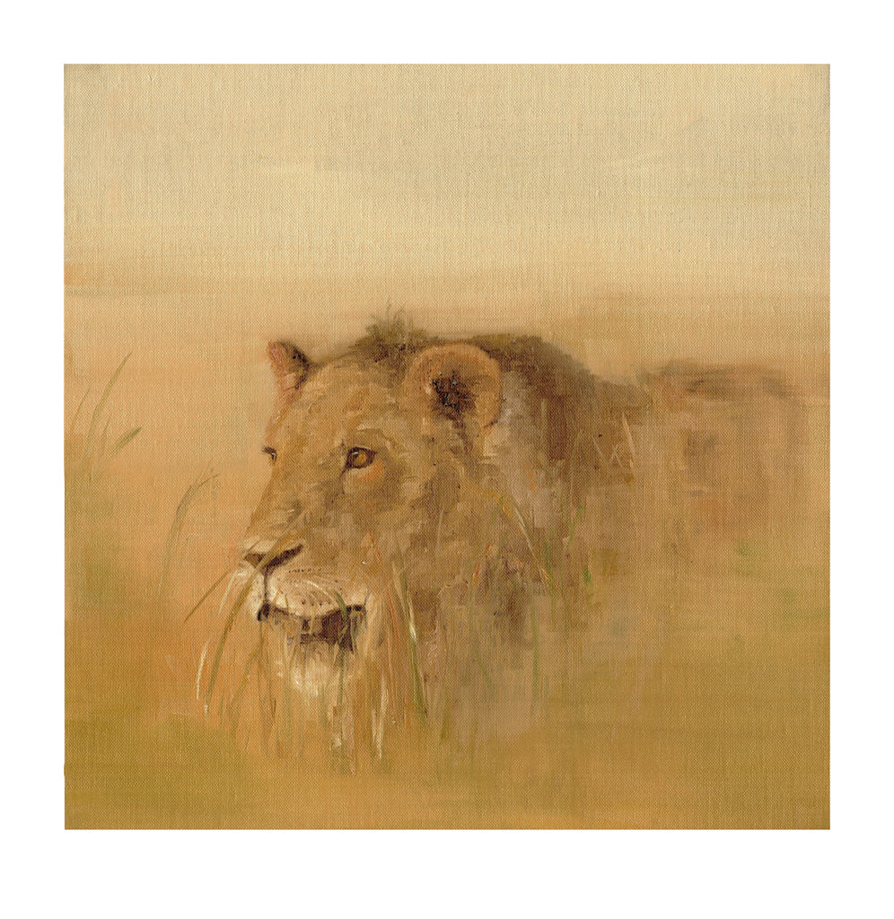Stalking Lion - Limited Edition Print