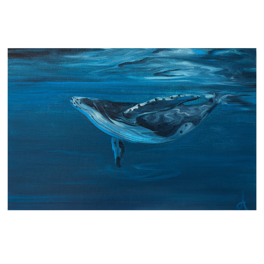 Blue Whale - Limited Edition Print