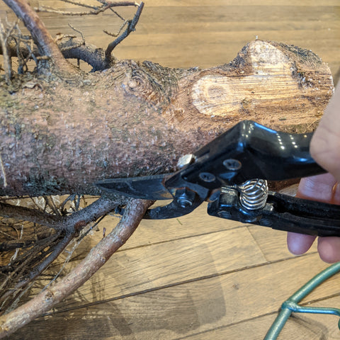 pruning bottom branches from christmas tree