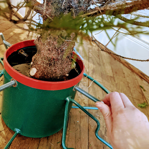 Securing a christmas tree in tree stand