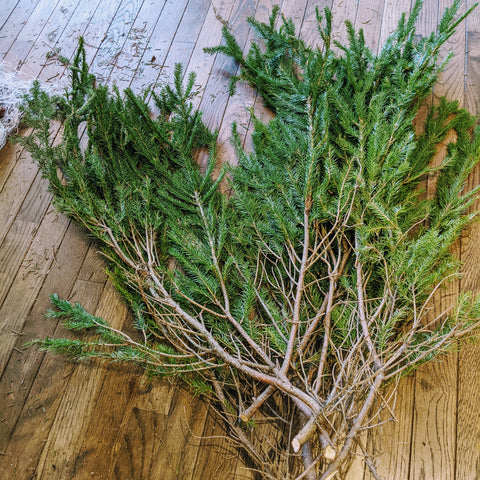 Trimmed tree branches