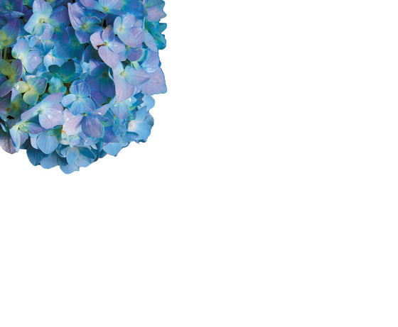 Hydrangea Floral Notepad