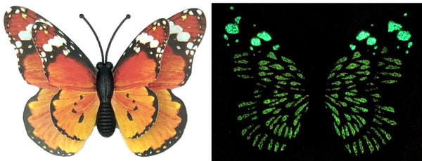 CLMG-126 Small Amber GLOW Butterfly