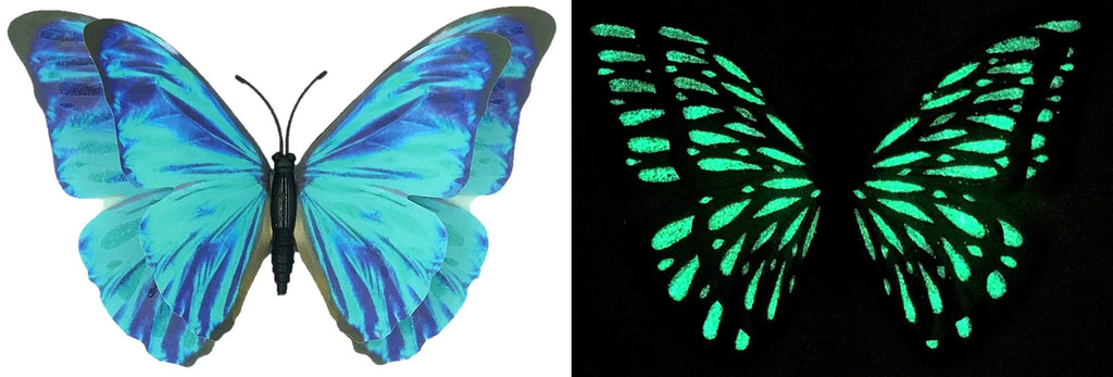 CLMG-146 Large Blue Morpho GLOW Butterfly