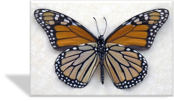 CRD-401 Monarch Specimen Photo Card