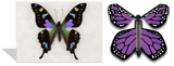 Magic Butterfly Cards - Purple Swallowtail