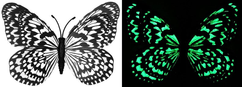 CLMG-151 Large Black and White GLOW Butterfly