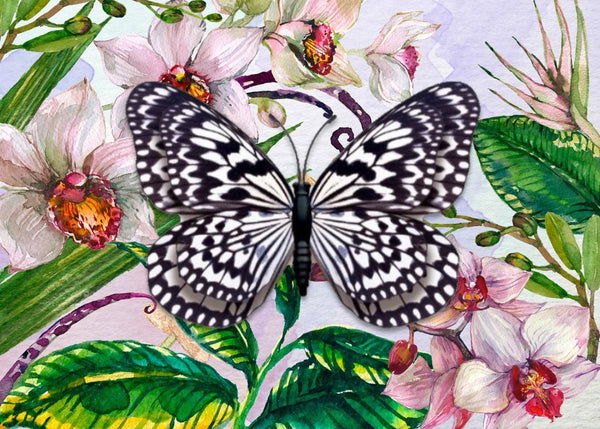 CRD-209 Black and White Butterfly on Orchid Floral