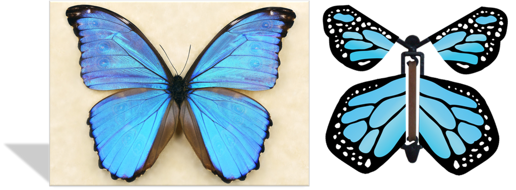 CRD-101 Blue Morpho Photo
