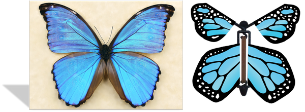 Magic Butterfly Cards - Blue Morpho Photo