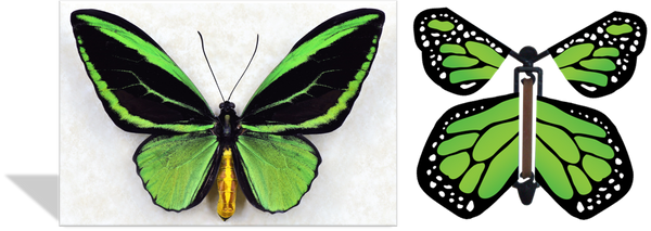 Magic Butterfly Cards - Green Birdwing Photo
