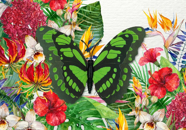 CRD-205 Malachite Butterfly on Tropical Floral