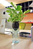 Refresh Glass Self Watering Planter