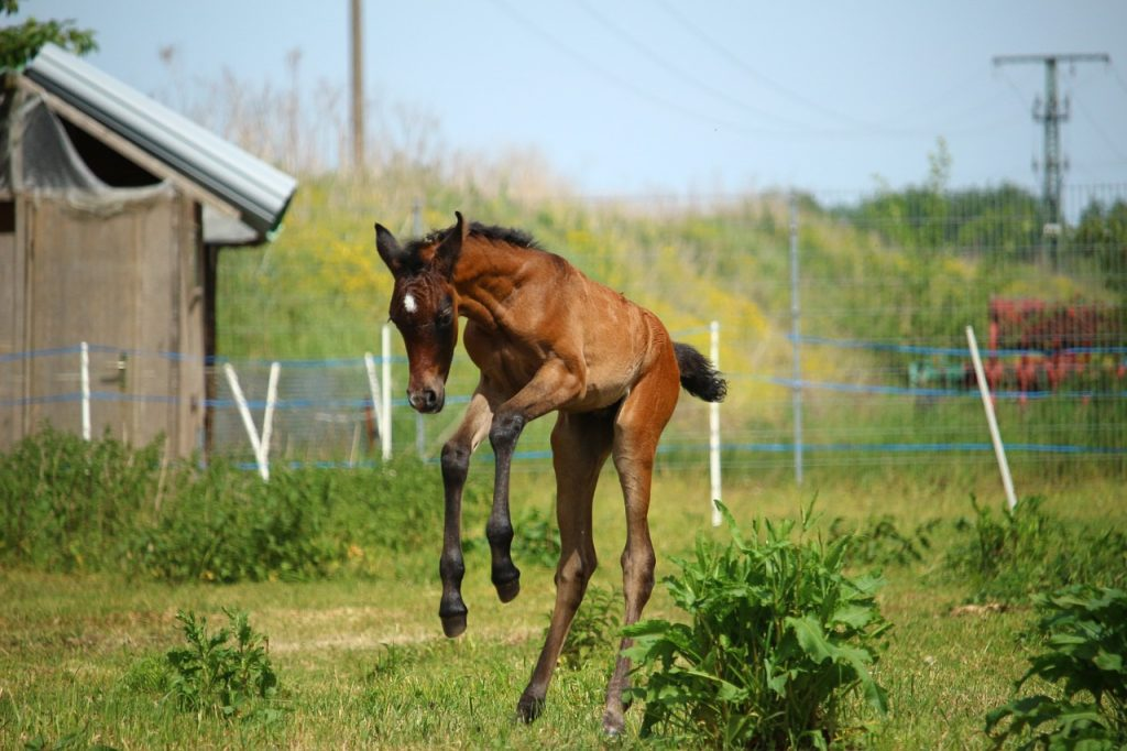 Foal leaping into the air