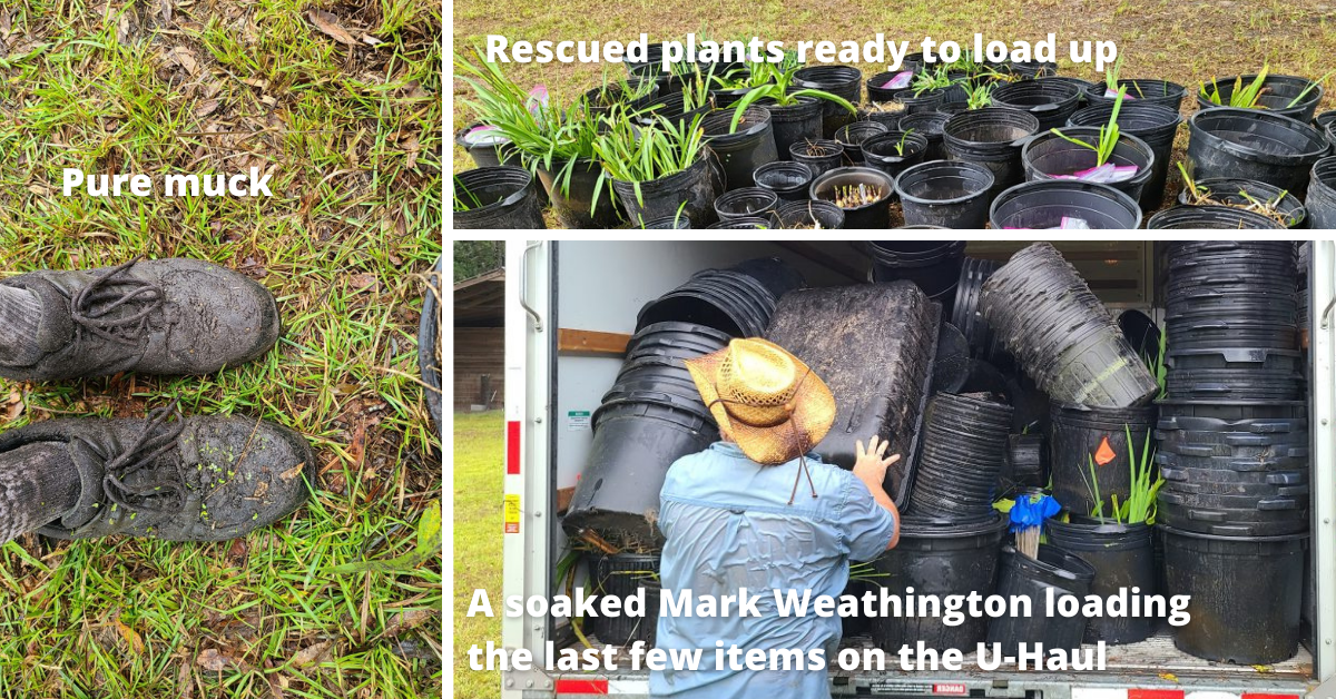 plant conservation methods, dirty shoes and loading up