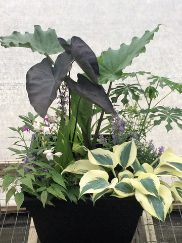 Learn all about container gardening