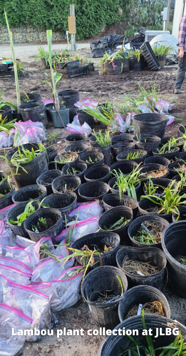 Vic Lambou's plants safely at Plant Delights Nursery