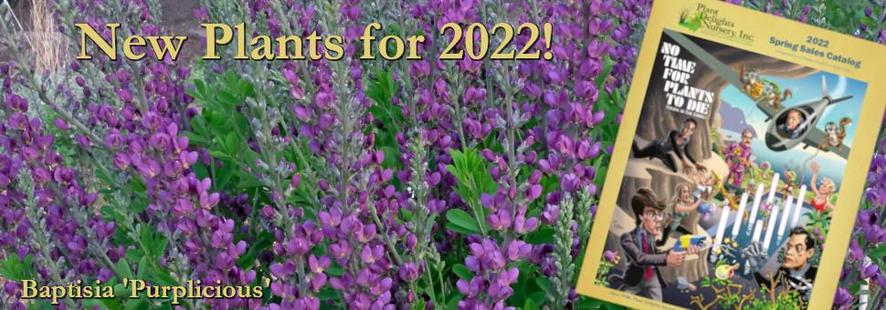 Plant Delights Nsy: New Plants for 2021