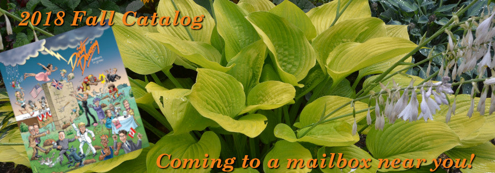 Image of Hosta 'Age of Godl', with 2018 Fall Catalog Inset