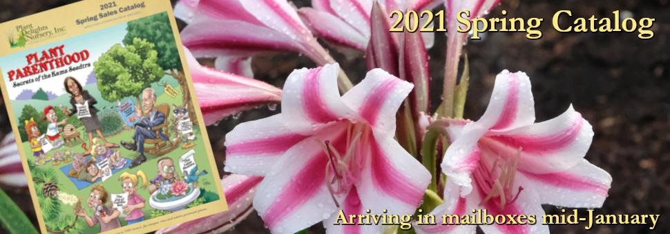 2020 Fall Catalog - Plant Delights Nursery at Juniper Level Botanic Garden