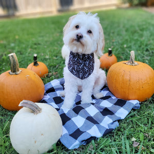 Spooky Skeleton Dog Bandana