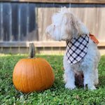 Load image into Gallery viewer, Halloween Plaid Dog Bandana