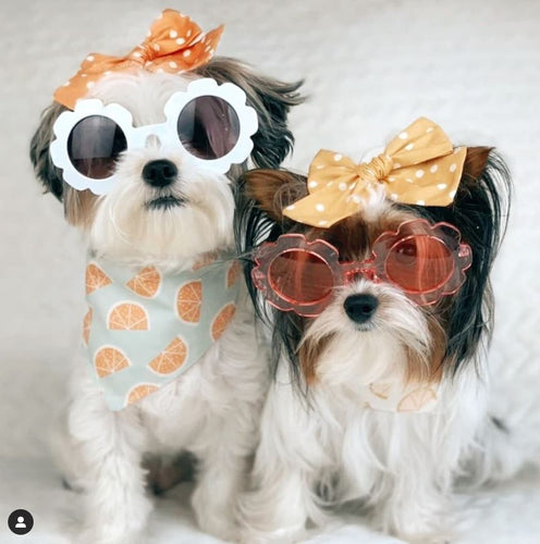 Custom Sunnies Bandana - Asher And Gray Designs