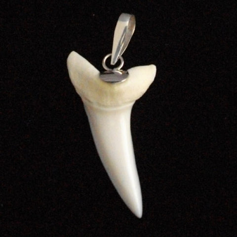 Mako shark's tooth silver infusion souvenir pic43