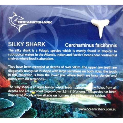 Silky Shark Information Card
