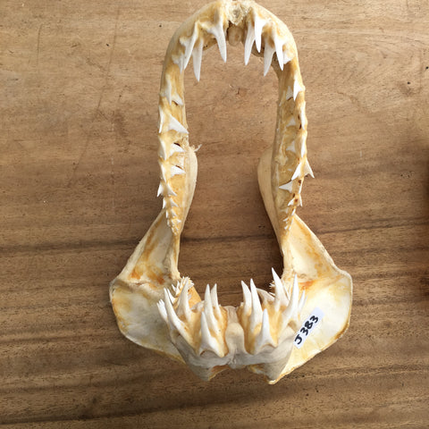 Mako Shark jaws fishing boating marine #383