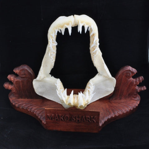 Mako Shark Jaws with stand Generic stand @413