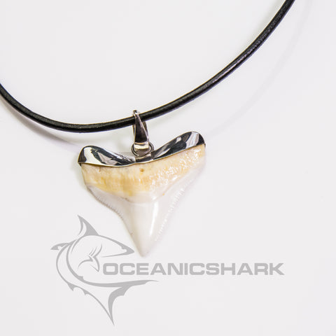 XXL Bull Shark tooth silver Ag classic stylish design large s13