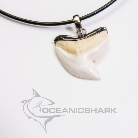 Tiger shark tooth silver cap slick design fishing hunting s24