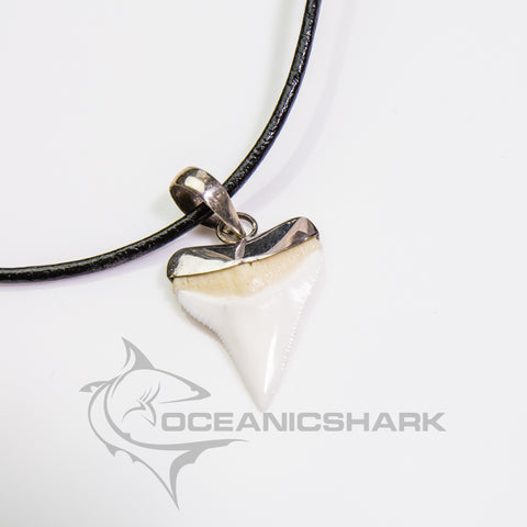 Oceanic white tip Shark Tooth silver s33