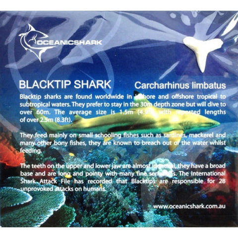 Blacktip Shark early learning Information card cc-bt2