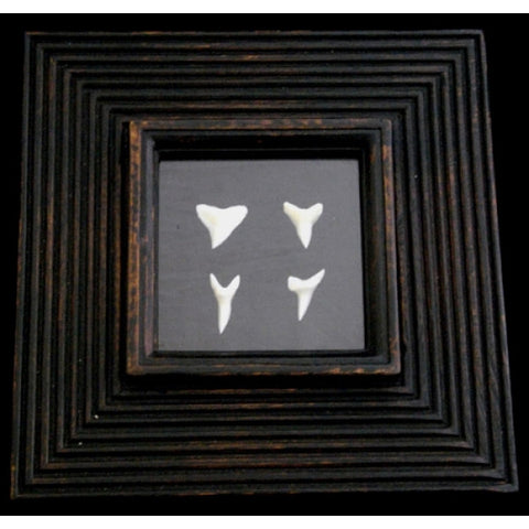 Picture Frame With Bull & Mako Shark Teeth