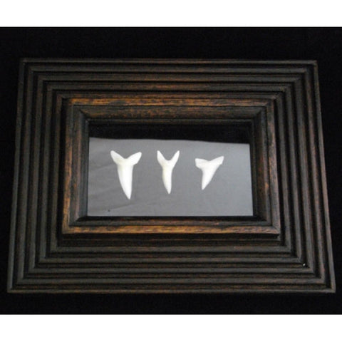 Picture Frame With Mako Shark Tooth Set pf-2