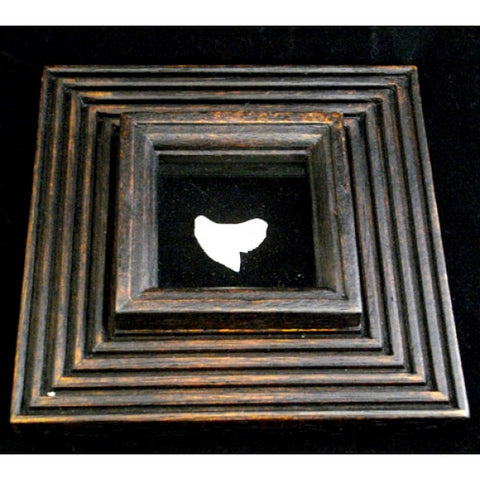 Picture Frame With Tiger Shark Tooth pf-4