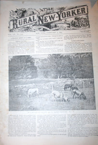 02 04 1893 NEWS Rural New-Yorker