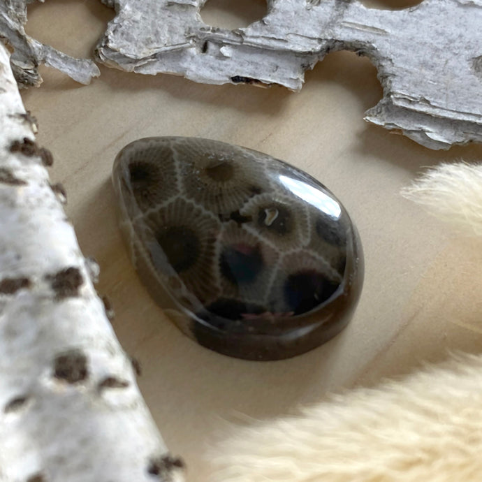 Petoskey Stone Cabochon Front View - Stone Treasures by the Lake