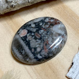 Crinoid Fossil Cabochon Front View II - Stone Treasures by the Lake