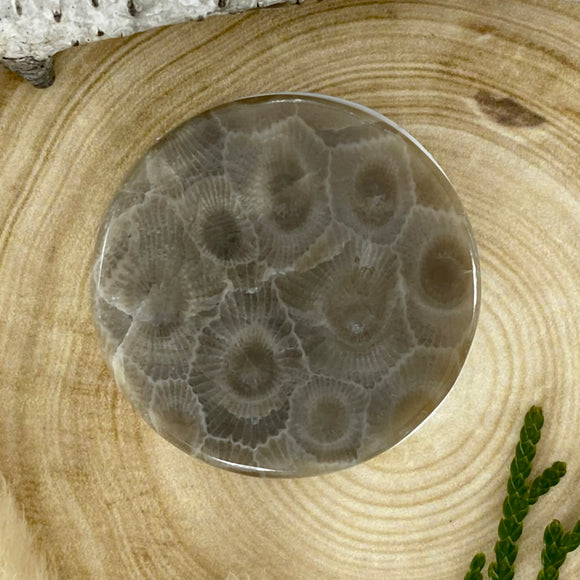 Petoskey Stone Popsocket Front View - Stone Treasures by the Lake