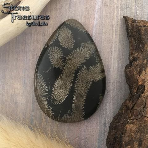 Cladophora Fossil Cabochon - Stone Treasures by the Lake